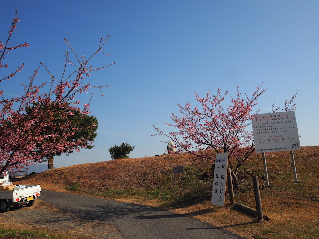 酒匂川サイクリングロード