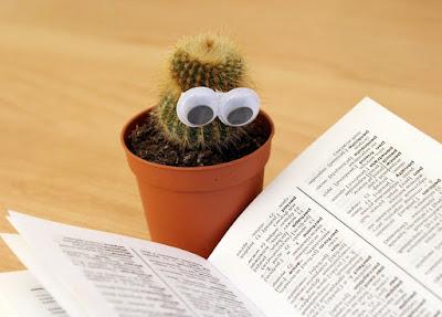 Tukang taman surabaya cara merawat kaktus
