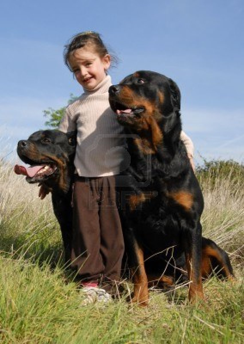 Cute Dogs Big Rottweiler Dogs