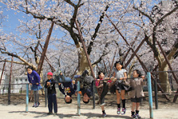 嘉代子桜満開!シロアリ被害克服!