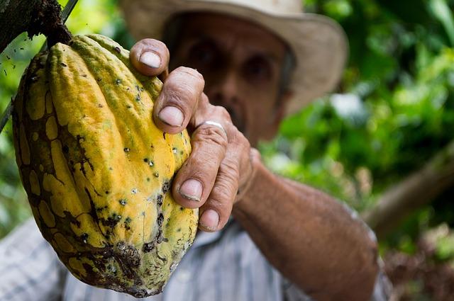 La manteca de granos de cacao abunda en vitamina E