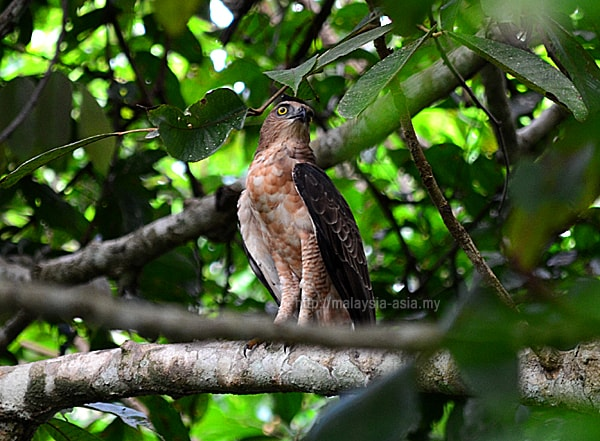 Photos of Borneo Bird Festival