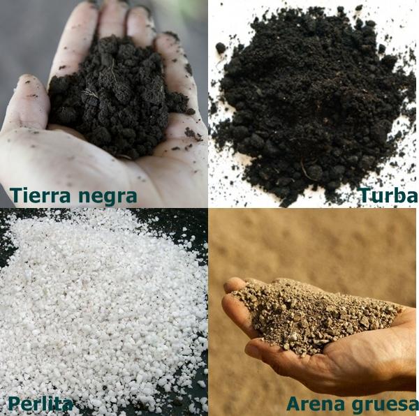 compost para macetas | entre plantas y macetas