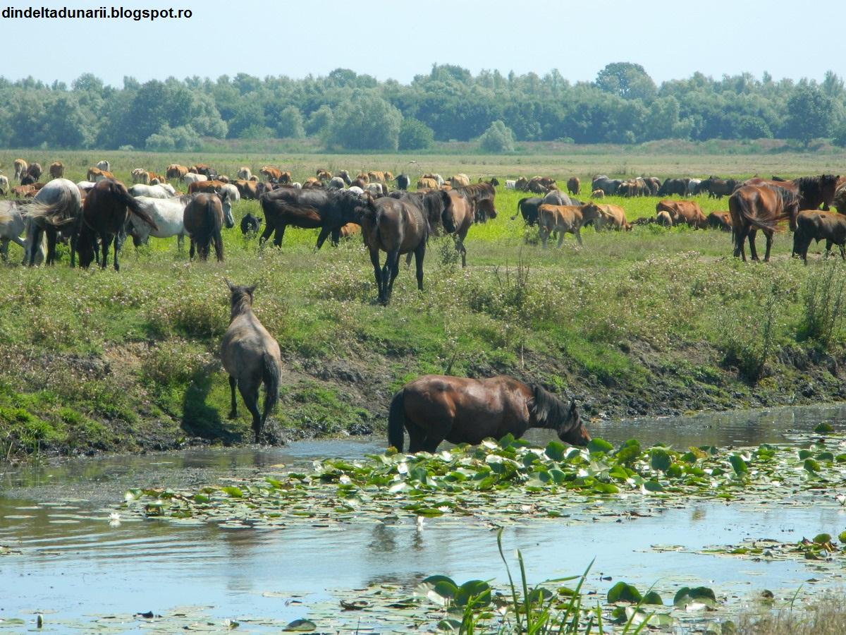fauna delta dunarii - softwaremonster info