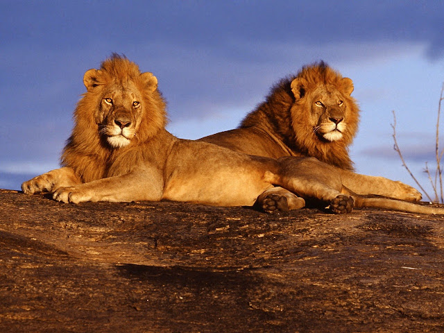 Tsavo Maneaters - Tamil Blog