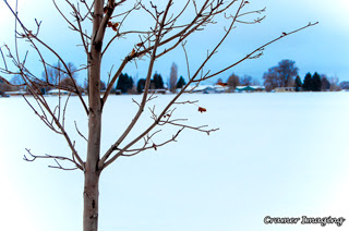 Cramer Imaging's professional nature landscape photograph of a blue toned solitary tree standing against the snow in Pocatello, Bannock, Idaho