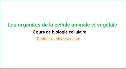 Les organites de la cellule animale et végétale