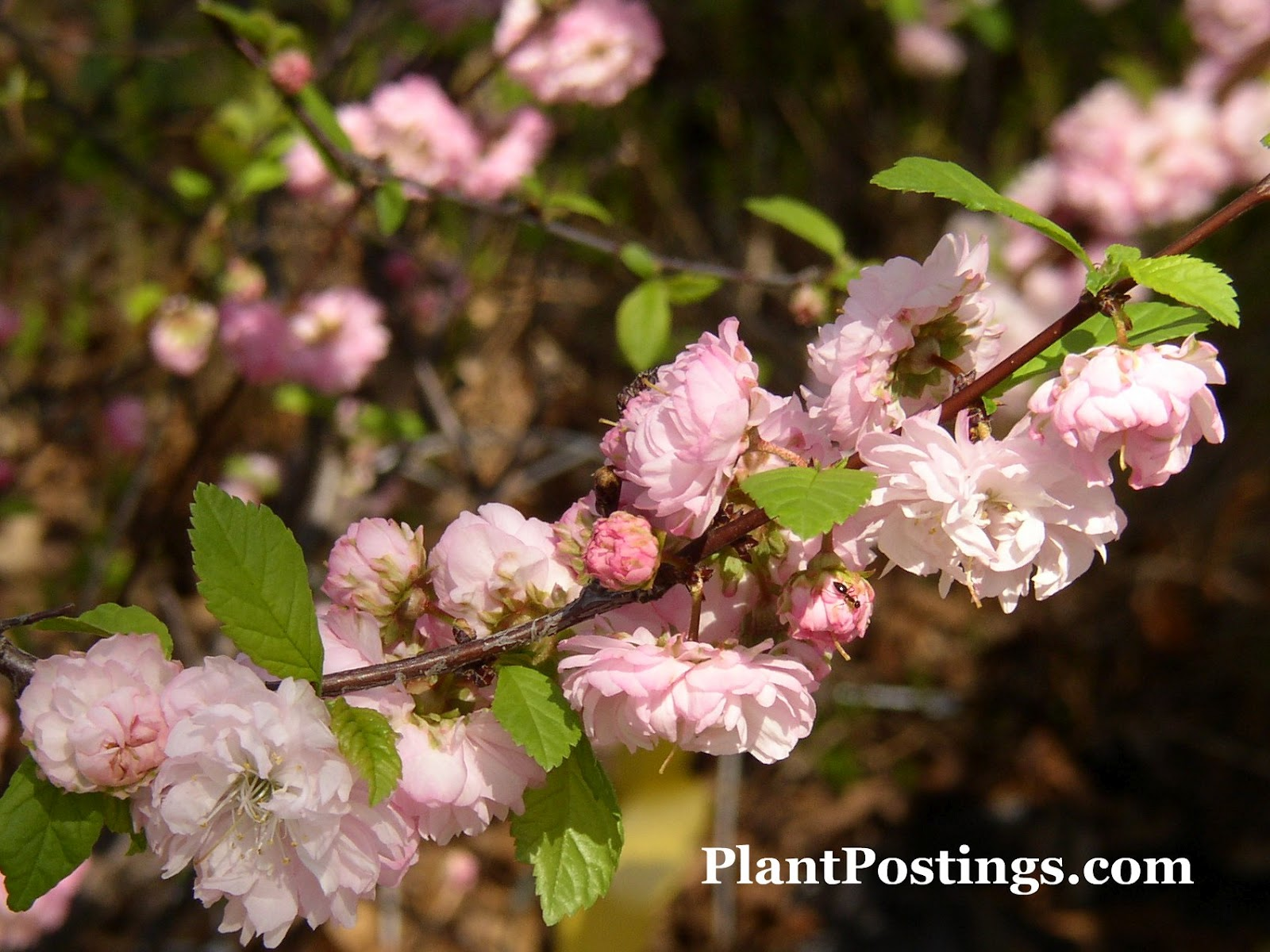 PlantPostings: My imaginary spring bouquet