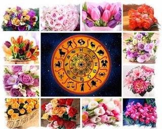 stihii-znakov-zodiaka-i-rasteniya-talismany