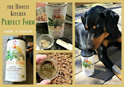 doberman resuce dog honest kitchen digestive supplement