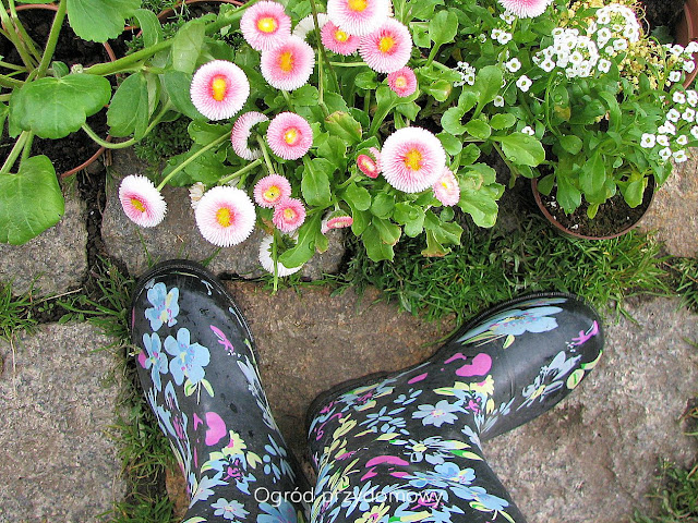 przygotuj się na wiosnę, ogród przydomowy
