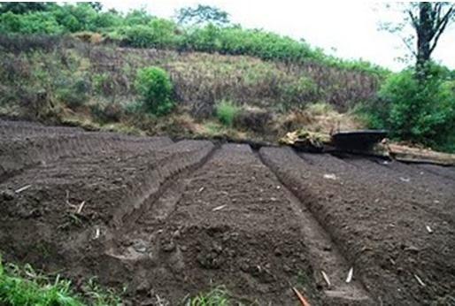 Hasil gambar untuk kesuburan tanah pasca letusan gunung