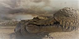 Sarcosuchus  Jenis Hewan Besar yang Menakutkan Hidup di Zaman Pra-sejarah