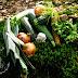 Leśna kuchnia cz. 73 - Zielone leczo z cukinii