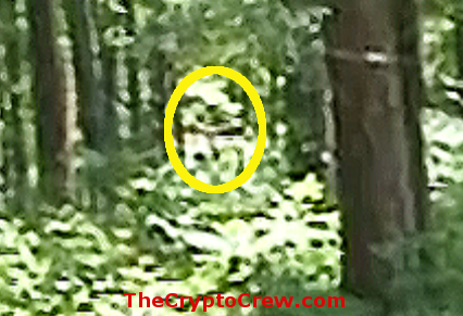 Bigfoot filmed in Mississippi