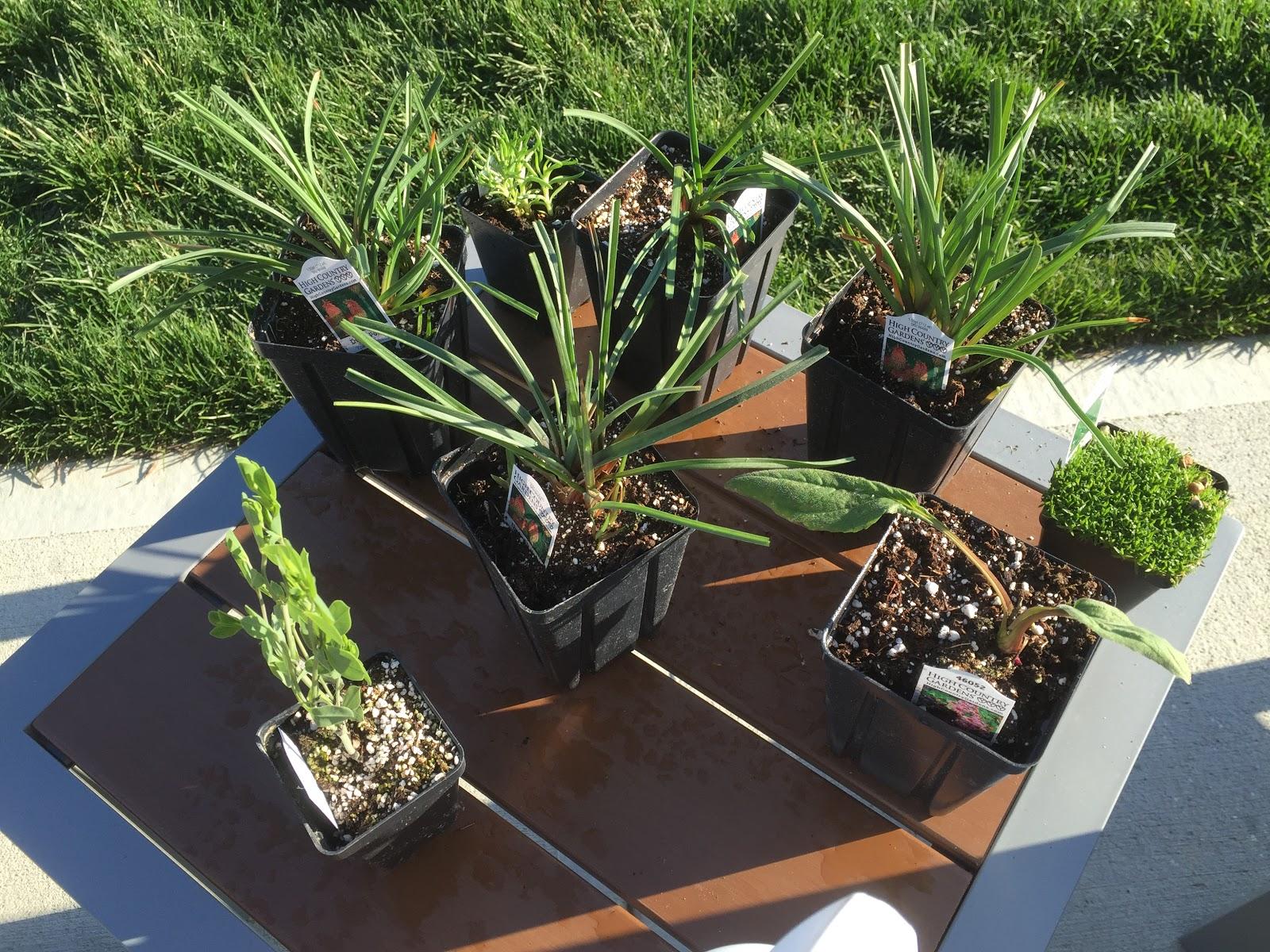 It S Mail Order Plant Day Backyard Neophyte Landscaping Blog