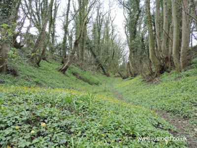 Overgrown ditch: Stanwick Camp, North Yorkshire
