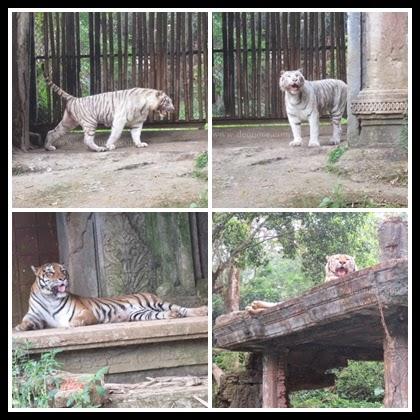 Taman Safari Indonesia 9