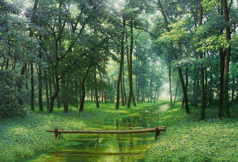 Fotos de paisajes boscosos 29