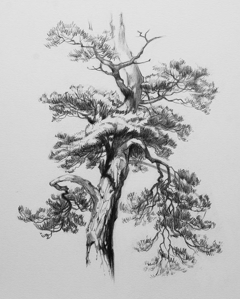 Wendy Siegelman drawings, paintings and watercolor |Tree Landscape Drawing