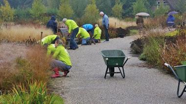 Plantando bulbos en Vlinderhof. Otoño 2015