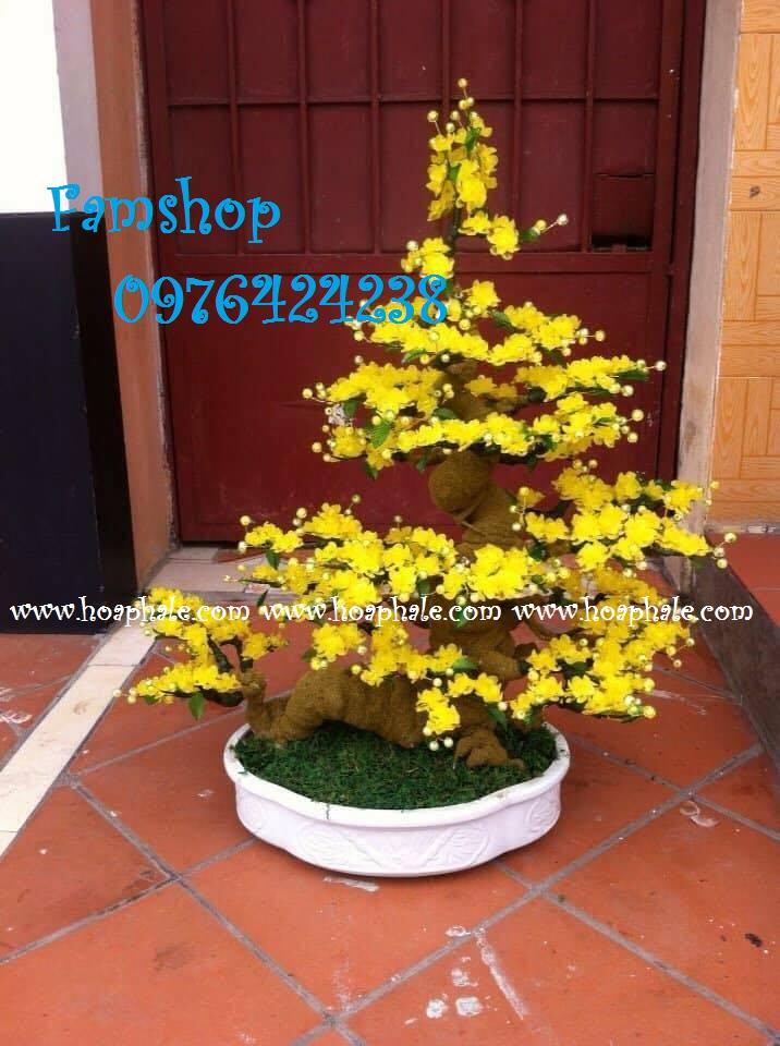 Goc bonsai cay hoa mai tai Gia Thuy