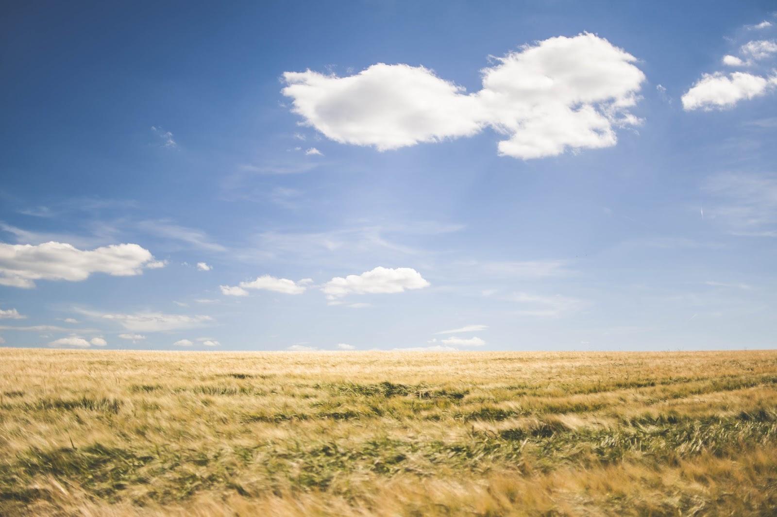 真昼の白い雲の下の茶色の草