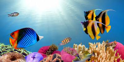 fish widescreen wallpaper