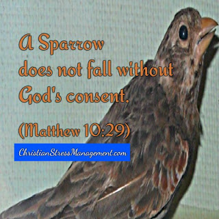 A sparrow does not fall without God's consent Matthew 10:29