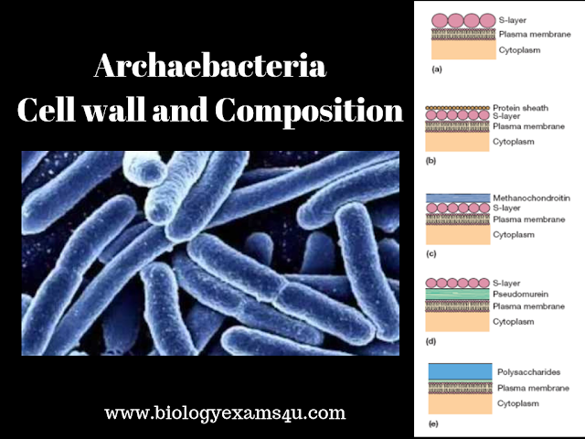 Archaebacteria Cell wall Structure and Composition