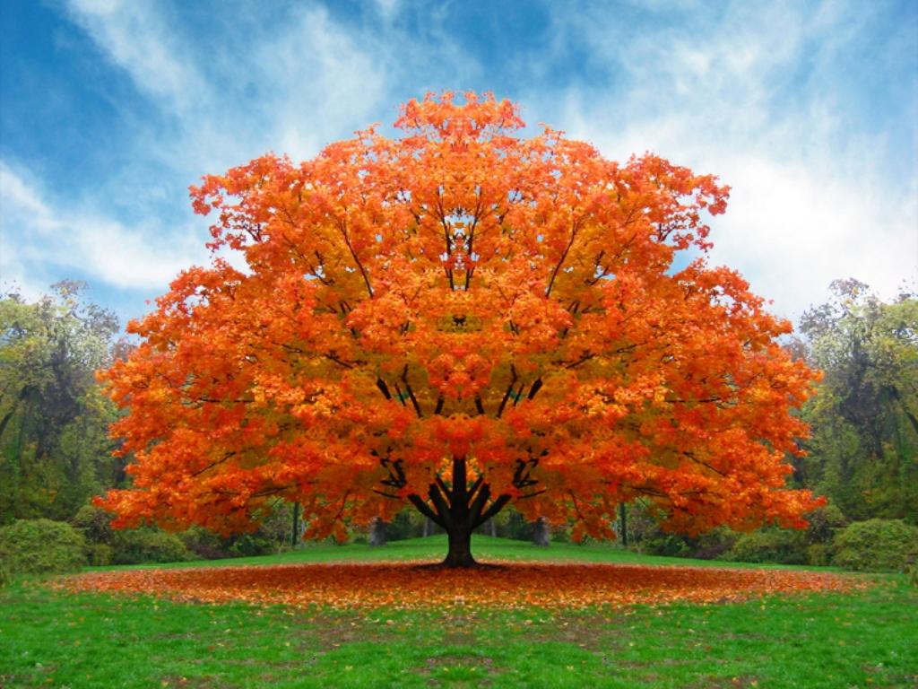 Guerriero della luce significato degli alberi for Alberi da ombra a crescita rapida