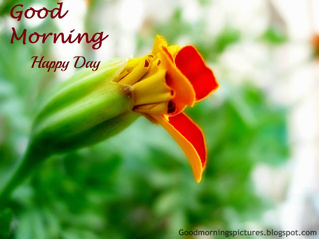 Good Morning Beautiful Birds Images : Good morning beautiful birds hd images azquotes