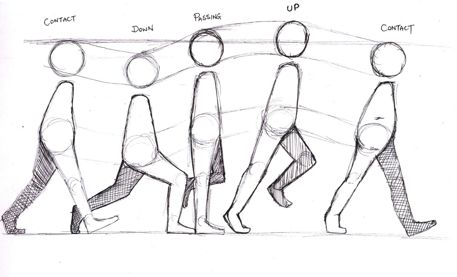 3d Character Animation Basic Walk Cycle