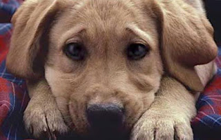 """Δήμος Δίου-Ολύμπου: Δηλητηρίασαν σκύλους στο Λιτόχωρο. Οι """"ΦΟΛΕΣ"""" σκοτώνουν τα ζώα"""