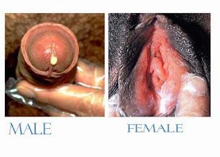 Obat Alami Kencing Keluar Cairan Bening Kental Dari Penis