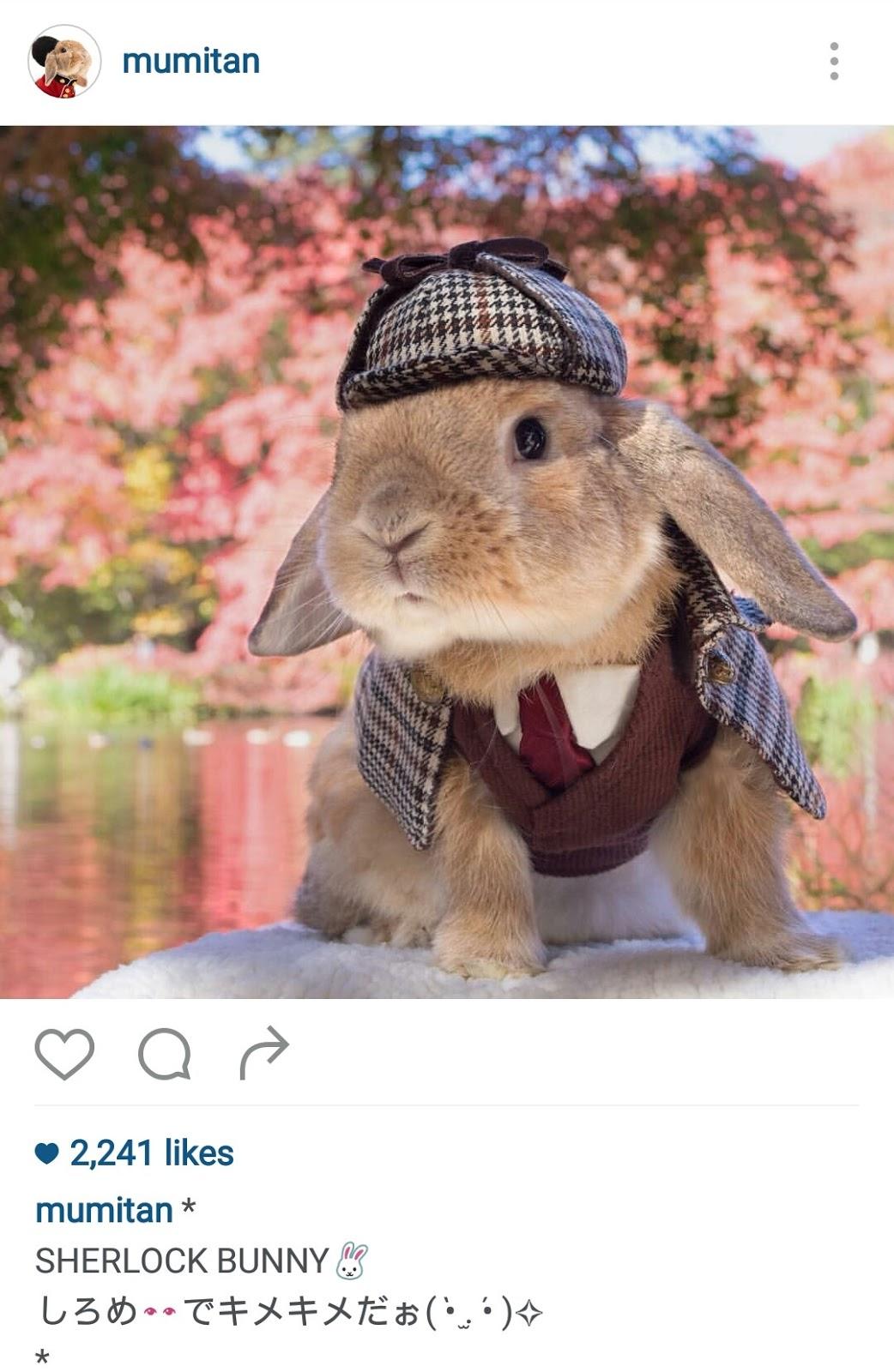 cutest bunny of Instagram, pets on Instagram