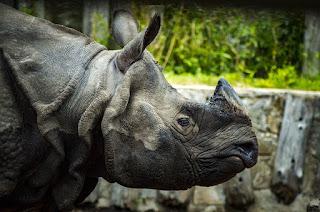 animal rainforest ecosystem