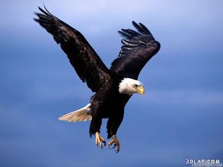صور طيور جميلة , اجمل صور طيور