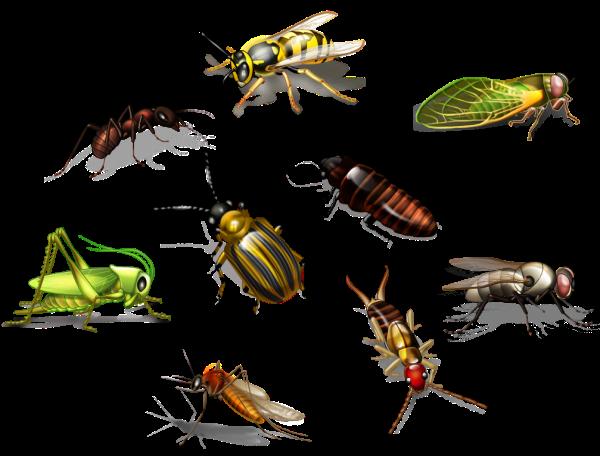 Características Básicas Dos Insetos Veja tudo que um animal precisa ter para ser, de fato , um inseto