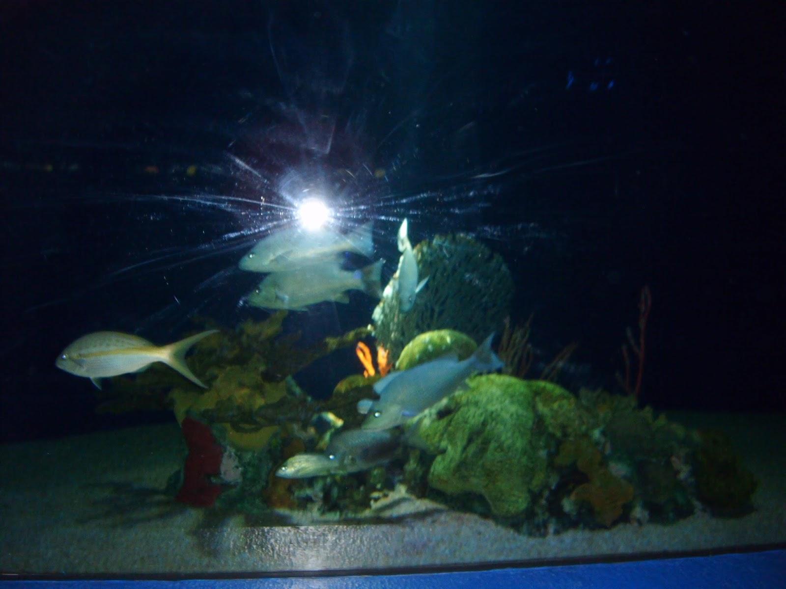 Antorcha de jardín peces estrella caracteres set con mango y despierta papel fuego Flair