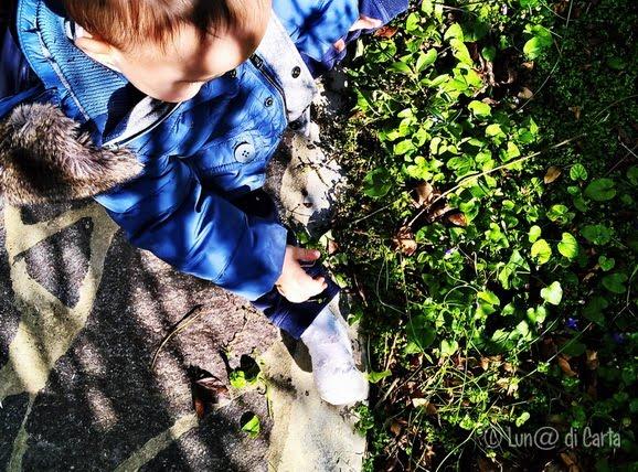 montessori, natura e bambini