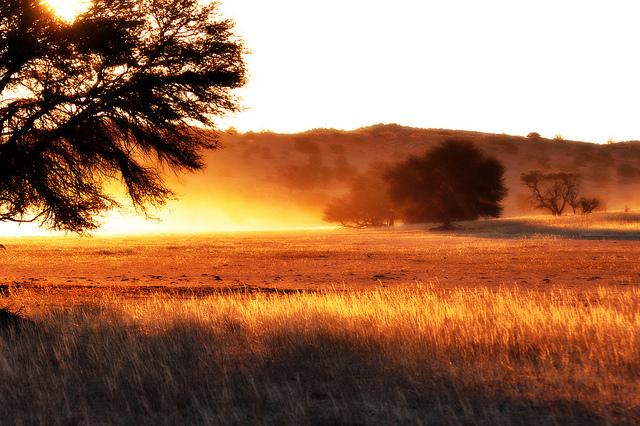Kgalagadi Transfrontier National Park ,Botswana