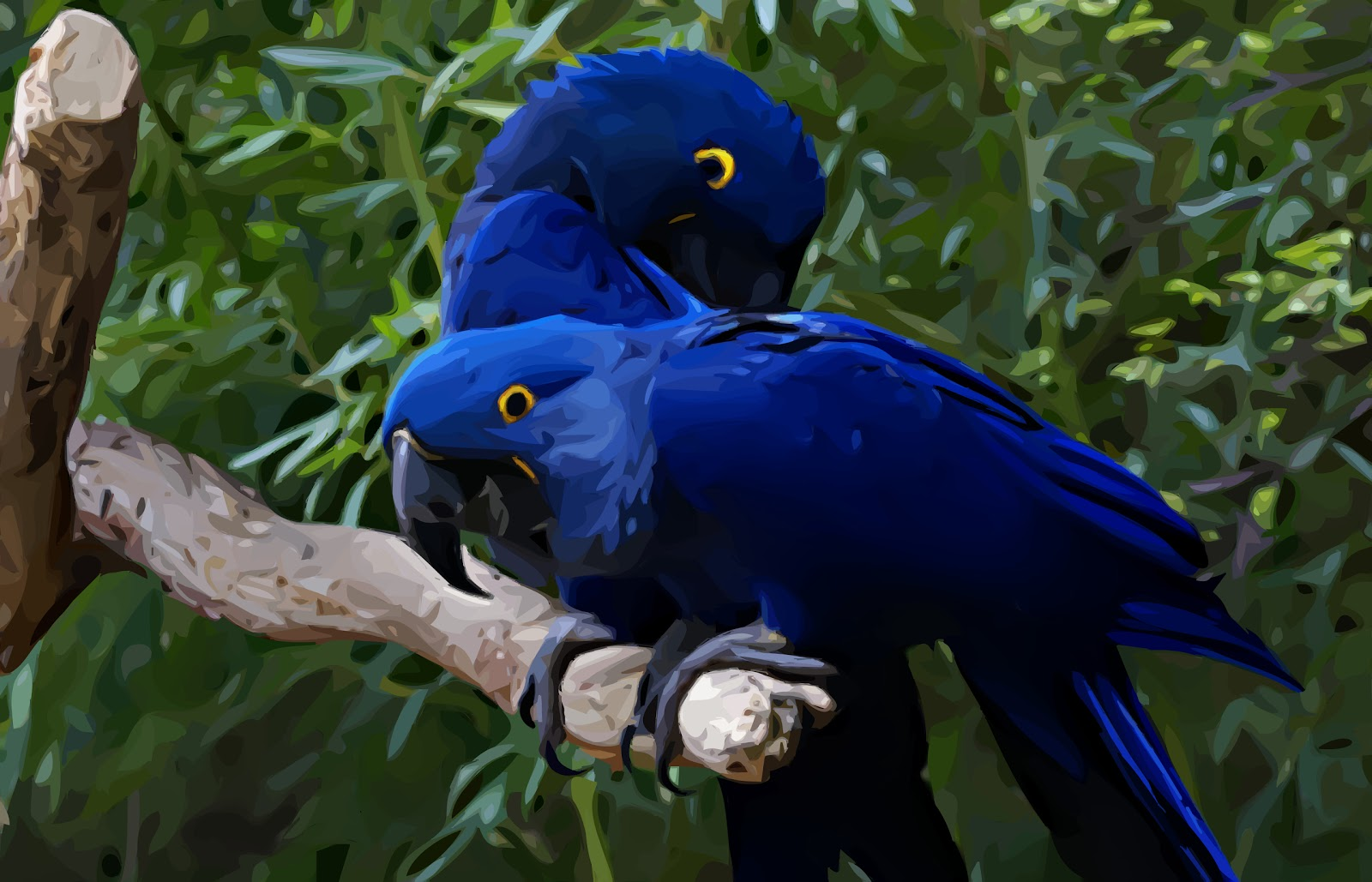 Mp3 Download Free Forever Love Birds Wallpapers Beautiful Birds