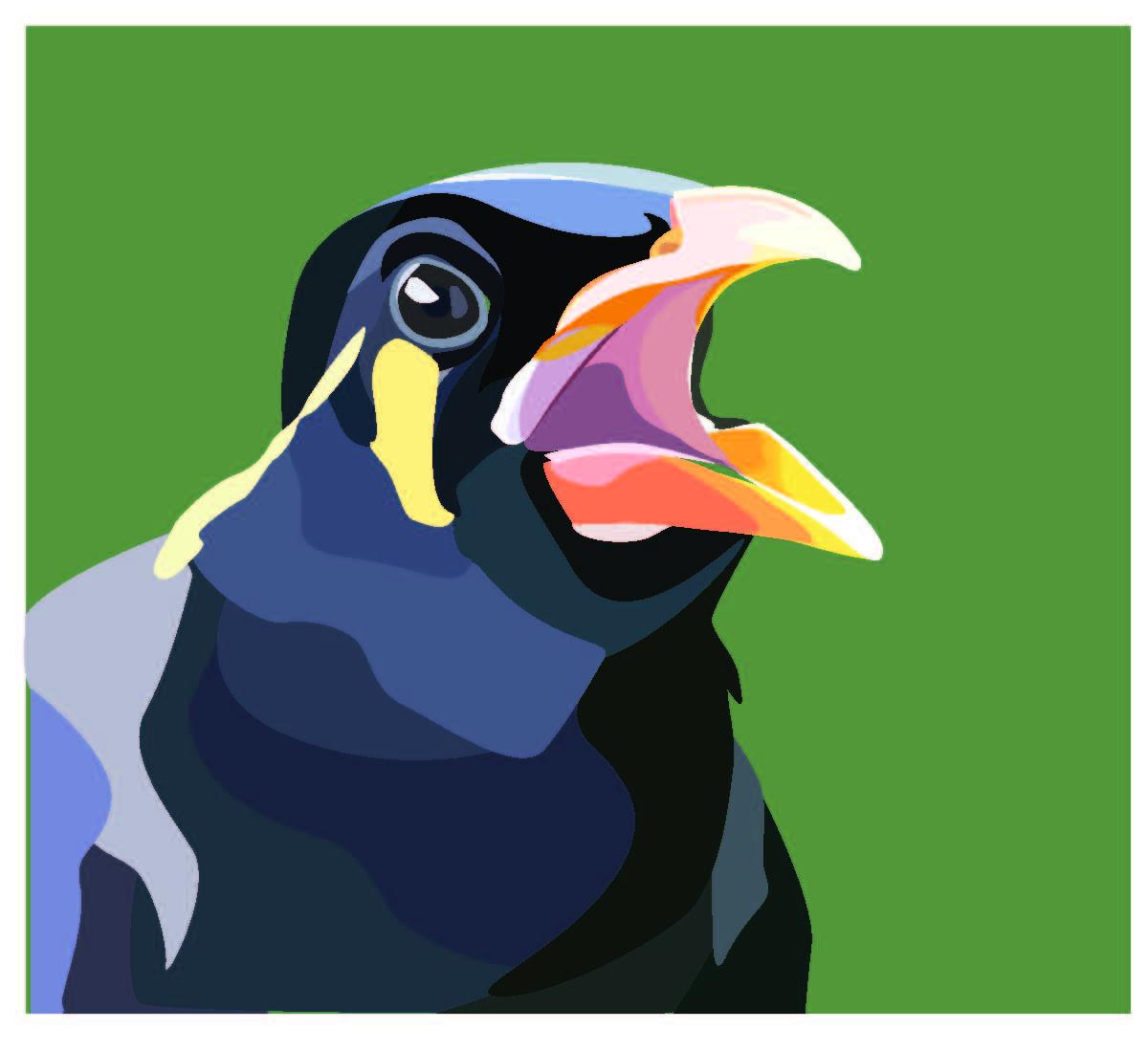 Mynah bird illustration