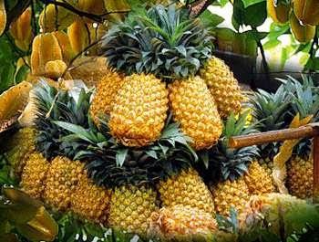 merupakan tumbuhan buah yang berasal dari Brasil Manfaat dan Khasiat Buah Nanas untuk Kesehatan