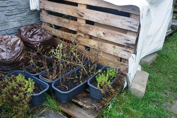 jesienne prace w ogrodzie, przygotowanie do zimy