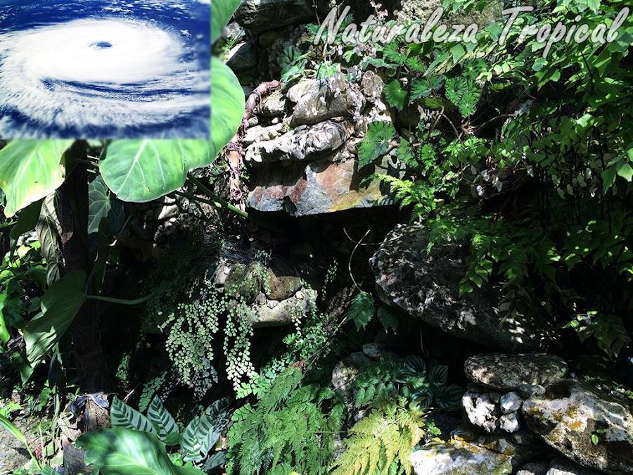 Medidas preventivas para proteger el jardín de fenómenos meteorológicos