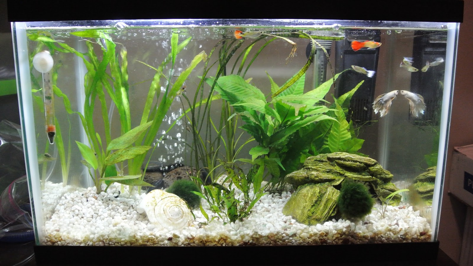 Crazy For Betta Fish Make Your Own Betta Cave