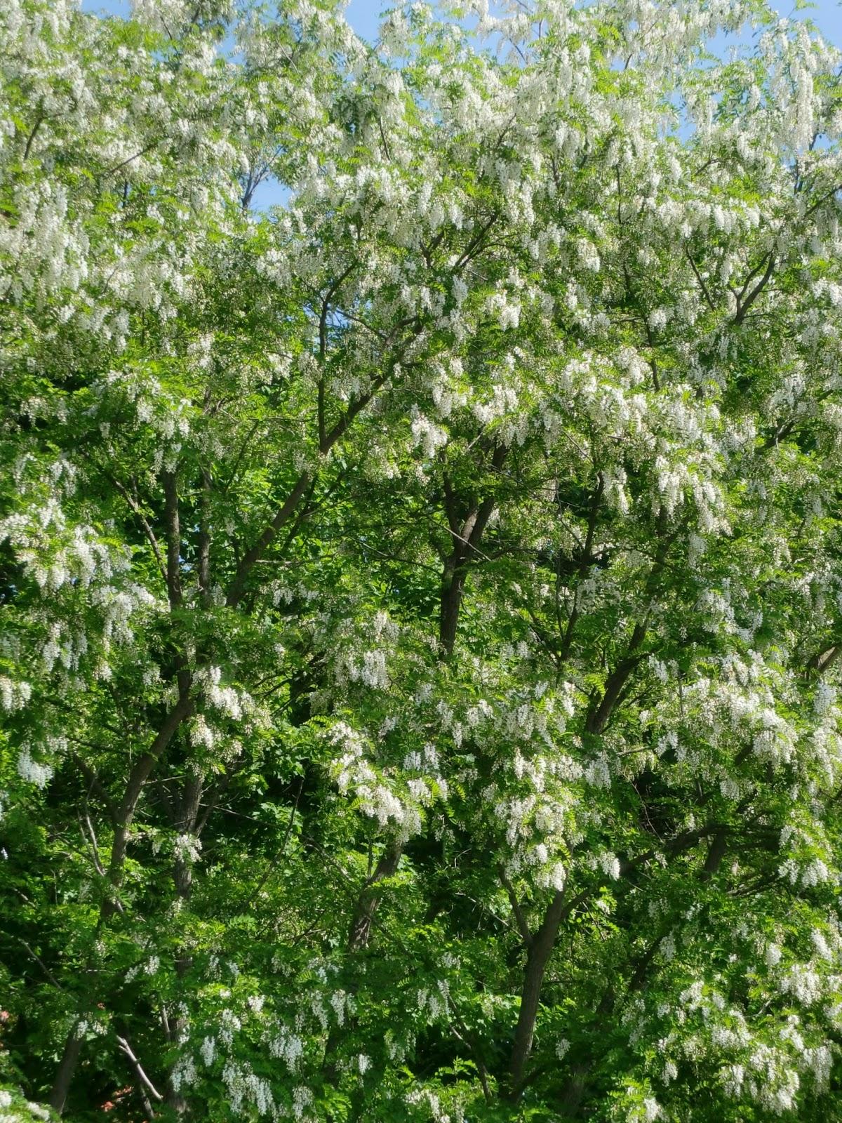 Bl C3 Bchende Blühende Winterharte Pflanzen Balkon Ostseesuche Com