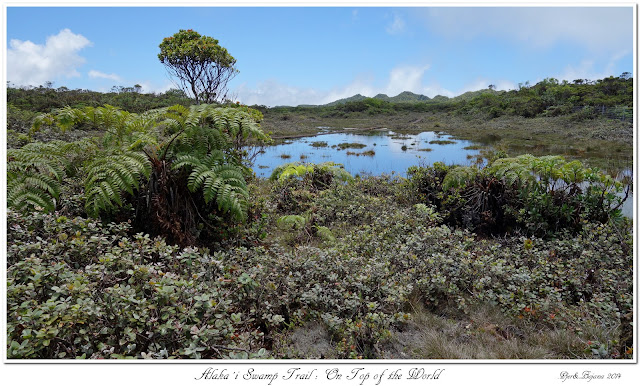 Alaka'i  Swamp Trail: On Top of the World
